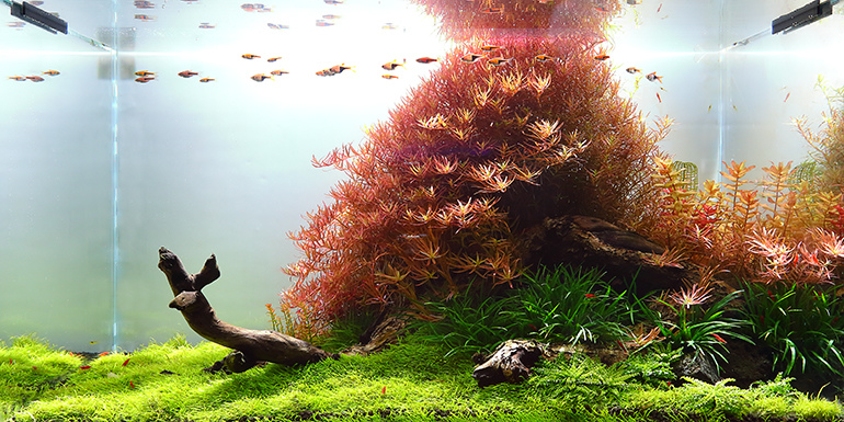 魚中魚240