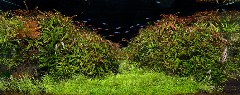 魚中魚394