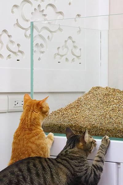縮圖-重鋪底沙