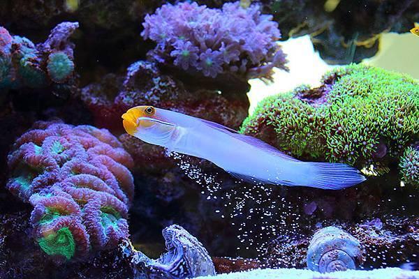 縮圖-海魚