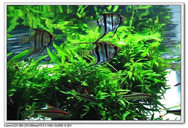 天空魚水族7.JPG
