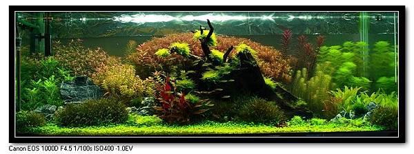 神木森林-2.jpg