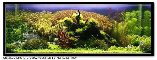 神木森林-3.jpg