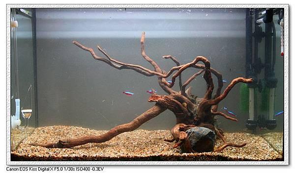 紅樹根.JPG