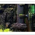油膜處理器上的黑毛藻.JPG
