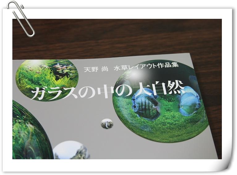 自然水草缸風格.JPG