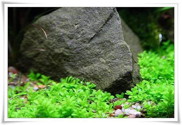 無藻石頭.JPG