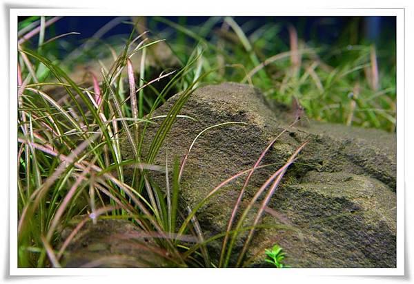無藻石頭2.JPG