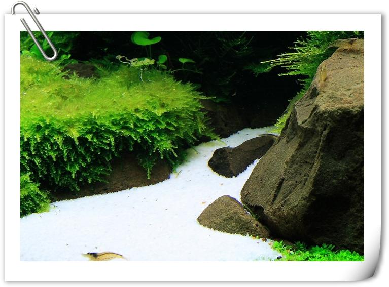 白色石英砂.jpg