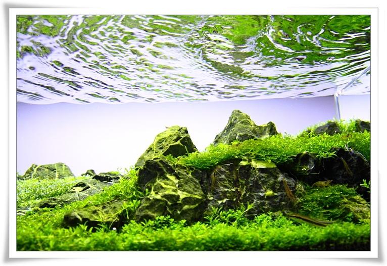 藻蝦的數量.JPG