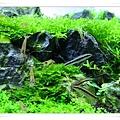 足夠的除藻生物.JPG
