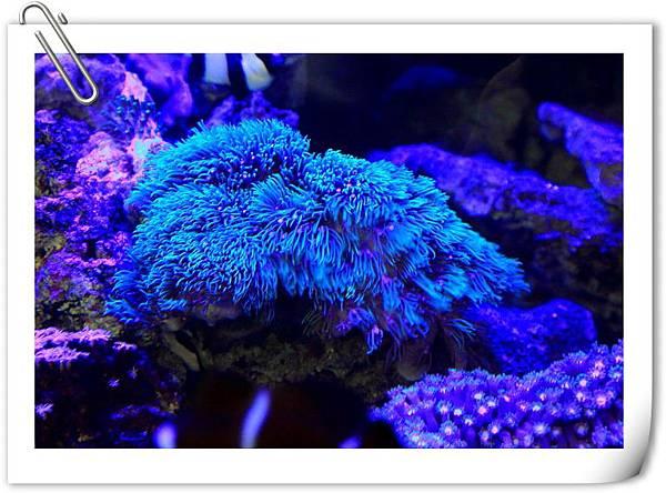 藍燈-1.JPG
