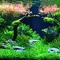 綠海水族.JPG