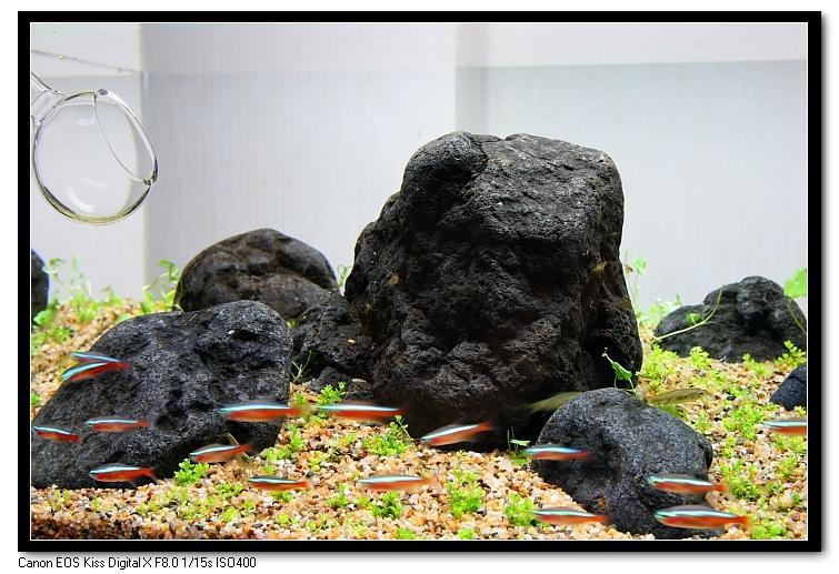類八海石.JPG
