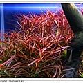 小紅莓700.jpg