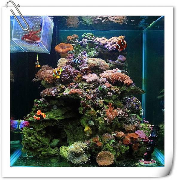 海水缸-1.JPG