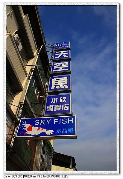 天空魚水族.JPG