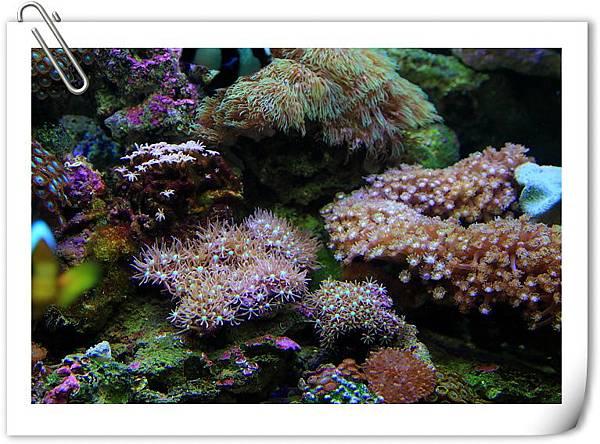 海水缸-6.JPG