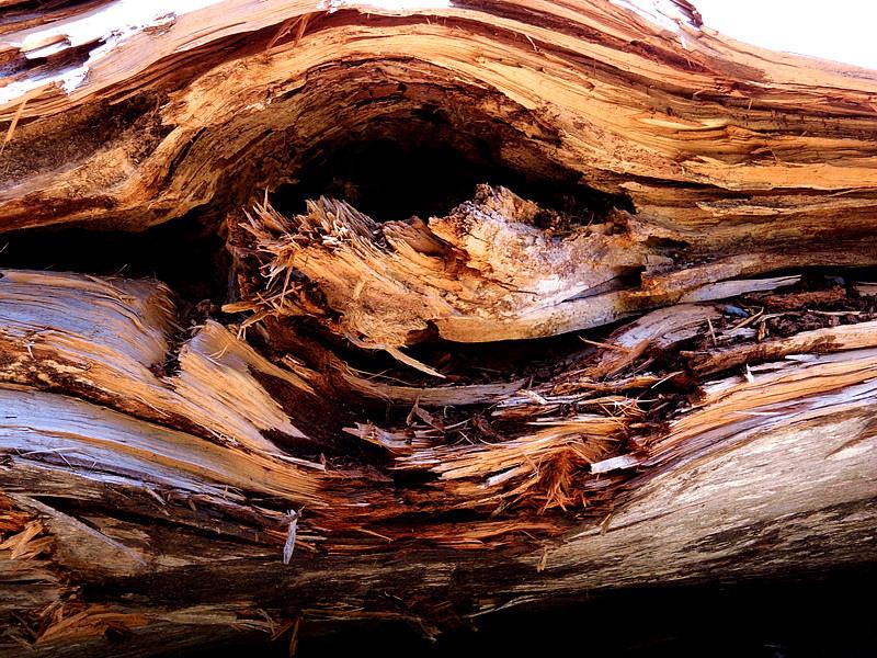 木之眼1.jpg