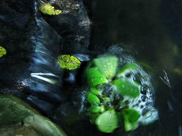 水轉浮萍-1.jpg