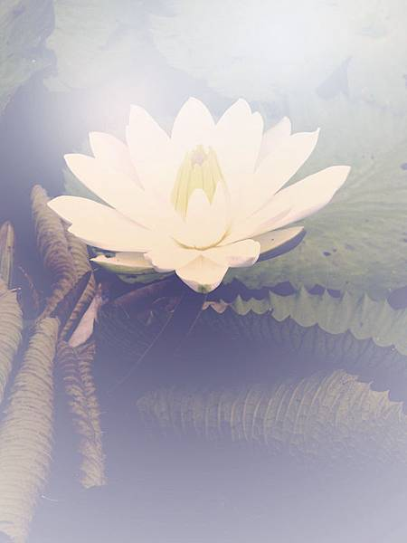 winter-lotus-flower_2.jpg