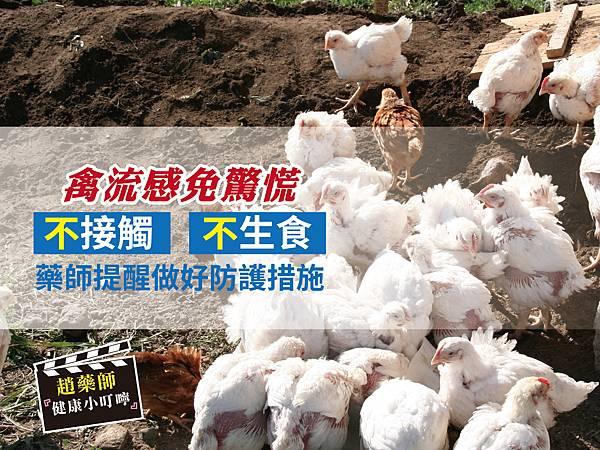 禽流感免驚慌-01.jpg