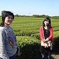 綠茶博物館外的綠茶田裡的兩位美女