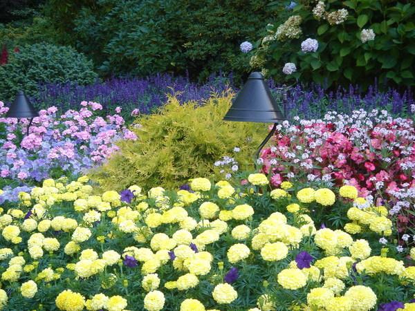 低窐花園中一隅