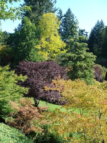 五顏六色的樹
