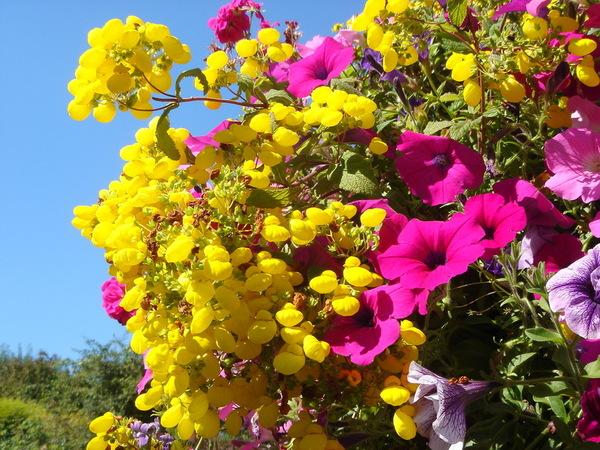神祕的立體花