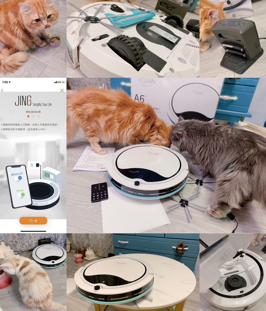 catsJING.jpg
