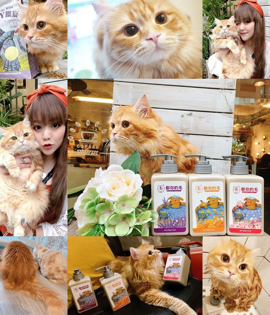 cats0001.jpg