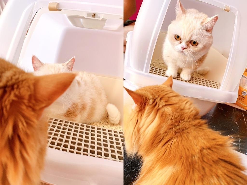 cats+++.jpg