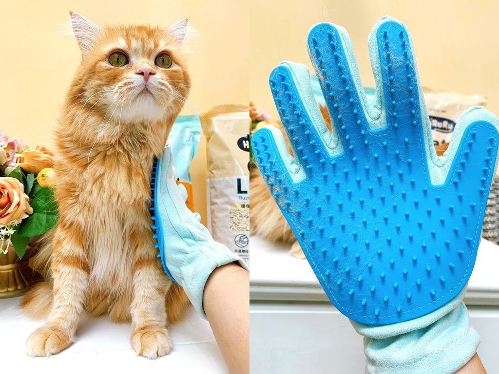 cats6.jpg