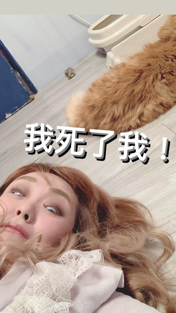 貓沐浴乳_汪汪寶貝  (26).jpg