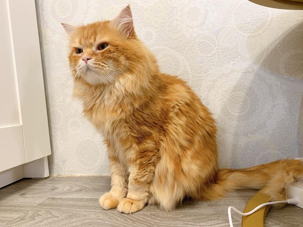 貓沐浴乳_汪汪寶貝  (14).jpg