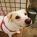 雅淳姐姐的狗狗整個好可愛啊!
