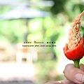 這隻辣椒很藝術。