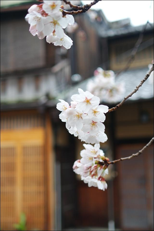 安井金比羅宮peachnote (14).JPG