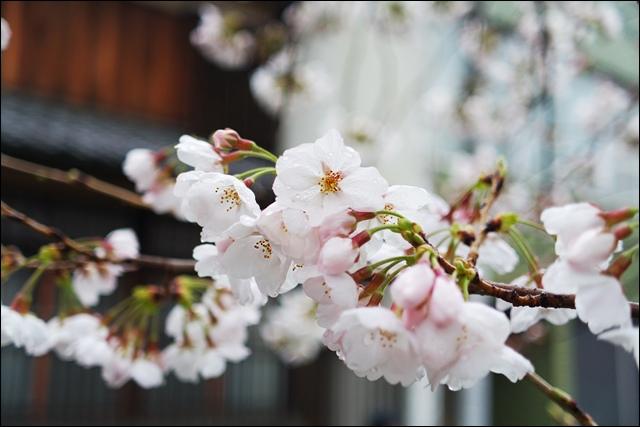 安井金比羅宮peachnote (15).JPG
