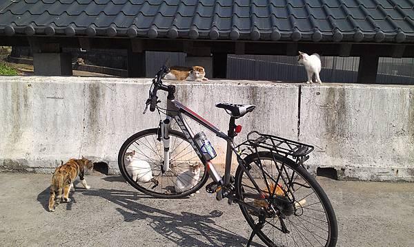 單車-老梅s