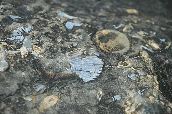 化石平台上的化石(攝影/Barton Wang)