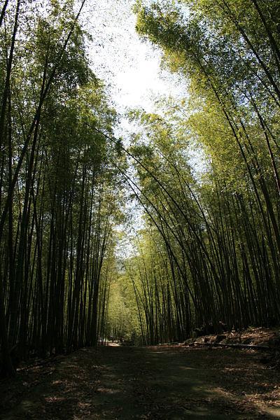 竹海步道.jpg