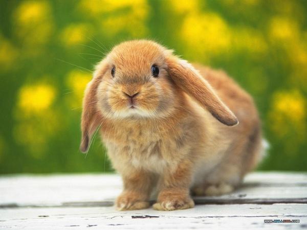 兔年行大運