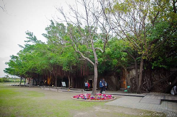 台南安平樹屋 8