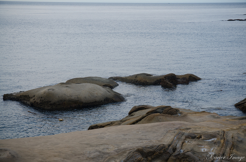 野柳地質公園_鱷魚石