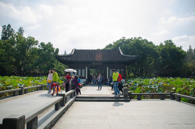 杭州西湖十景_曲院風荷 3