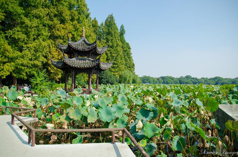 杭州西湖十景_曲院風荷 5