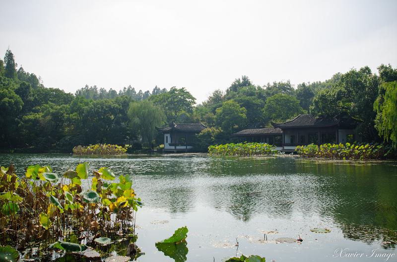 杭州西湖十景_曲院風荷 8
