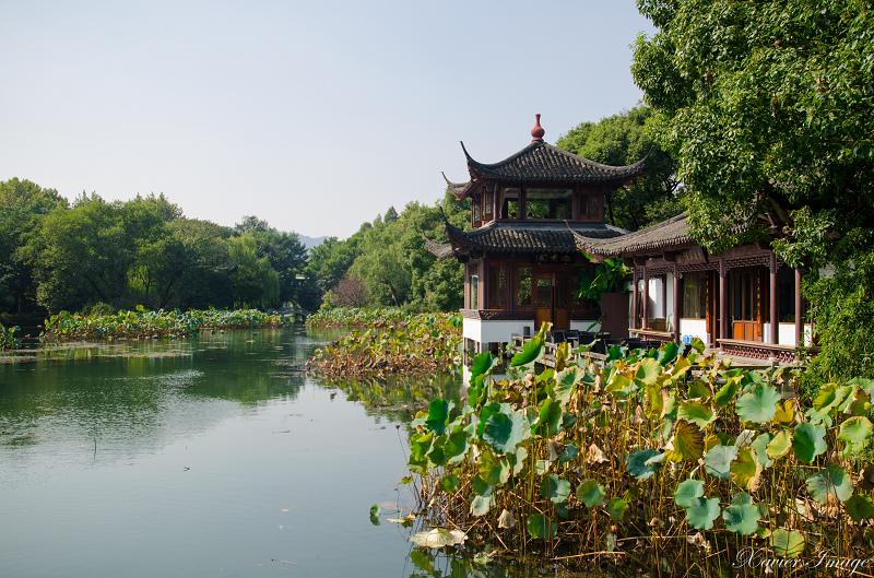 杭州西湖十景_曲院風荷 9